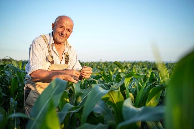 Портрет старшего трудолюбивого фермера-агронома на кукурузном поле, проверяющего урожай перед сбором урожая