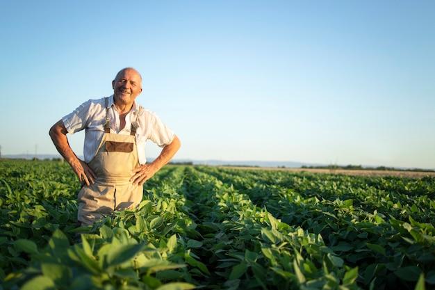 Портрет старшего трудолюбивого фермера-агронома, стоящего на поле сои, проверяя урожай перед сбором урожая