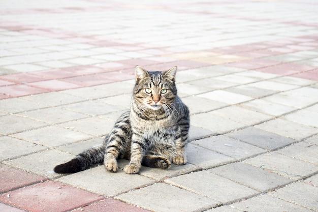 아스팔트 도로에 얽히고 설킨 고양이의 초상화. 콘크리트 길에 앉아 있거나 노란 눈으로 숨어있는 고양이를 닫습니다. 길에 앉아 있는 매력적인 고양이는 부주의합니다. 카메라를 보고 있는 얼룩무늬 거리 고양이.