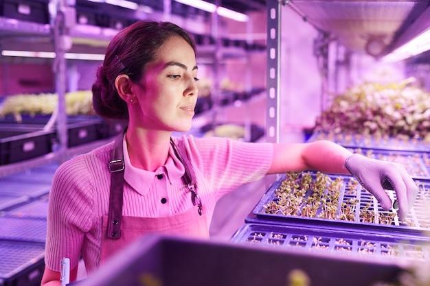 紫外線、コピースペースに照らされた保育園の温室に立っている間、芽トレイ上の植物を調べる笑顔の女性労働者の肖像画