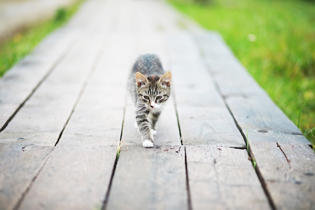 縞模様の猫の肖像画、かわいい小さな灰色の猫のクローズアップ、休息中の猫の肖像画