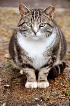 Портрет полосатой кошки обжора с зелеными глазами