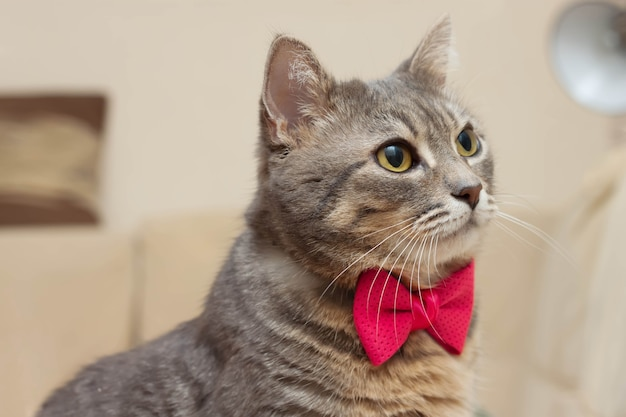 핑크 나비 줄무늬 회색 고양이의 초상화