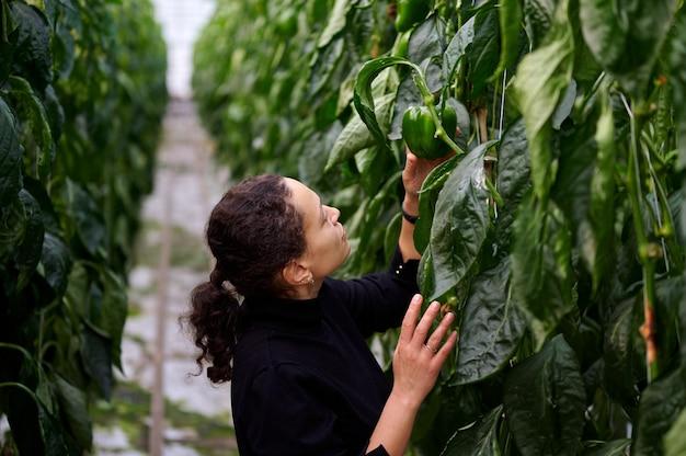 ピーマンの収穫を見ている混血の若い女性農学者の肖像画