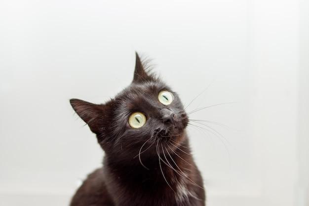 Портрет молодой черной кошки с желтыми глазами на белом фоне