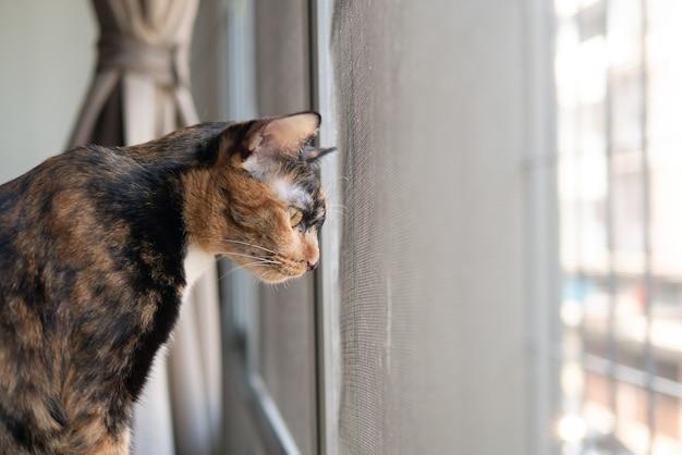 Портрет трехцветного кота смотрит на что-то через окно с любопытным лицом