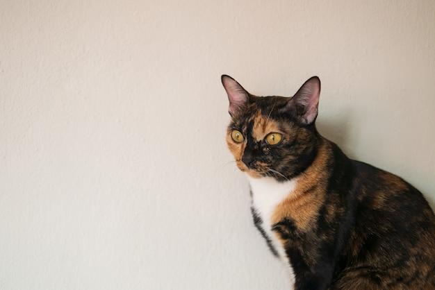 Портрет трехцветного кота сидит со скучным и любопытным лицом дома для концепции расслабления ленивого образа жизни с копией пространства