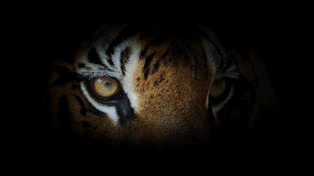 호랑이의 초상화입니다.
