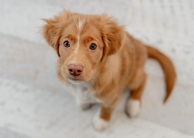 家で見上げながら楽しんでいる有料の子犬の肖像画、上面図