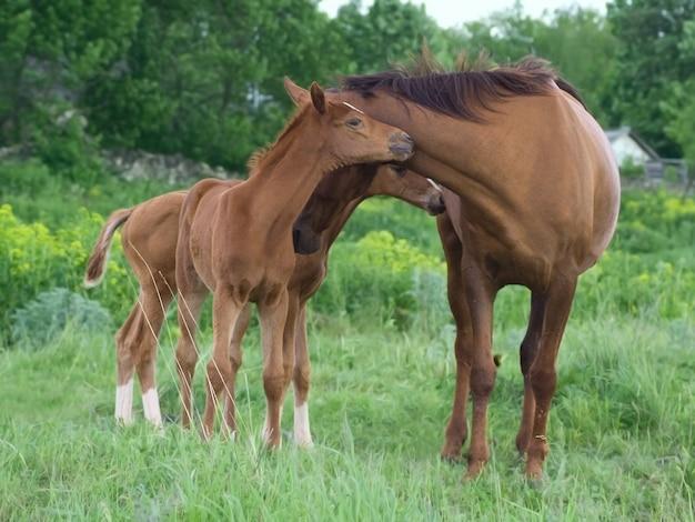 緑の背景に2頭の馬の肖像画