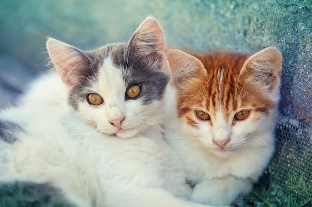 屋外で2匹の子猫の肖像画。庭に横たわっている面白い子猫のカップル