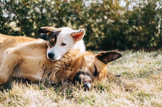 屋外の芝生の上に並んで座っている2匹の野犬の肖像画。