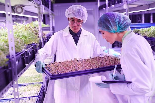 苗床温室、コピースペースのトレイに新しい芽を調べる2人の若い労働者の肖像画