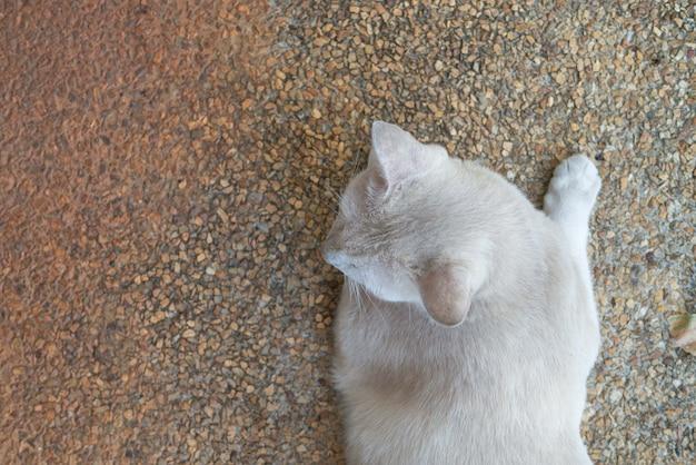 Портрет белого серого кота лежит на земле, глядя на что-то для концепции расслабления ленивого образа жизни сверху