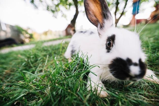 Портрет белого кролика, играющего на зеленой траве