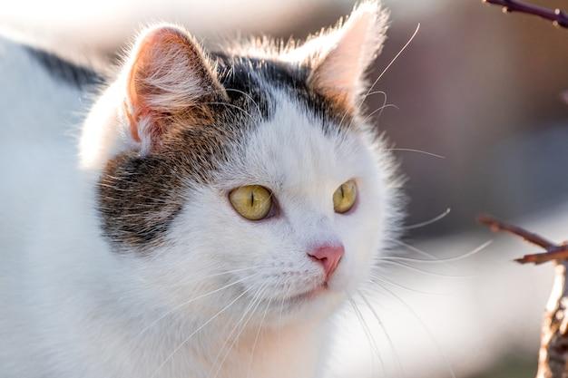 晴天時に白い斑点のある猫の肖像画 Premium写真