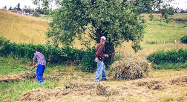 フィールドで乾草をかき集めて一生懸命働いている若いと年配の男性の肖像画
