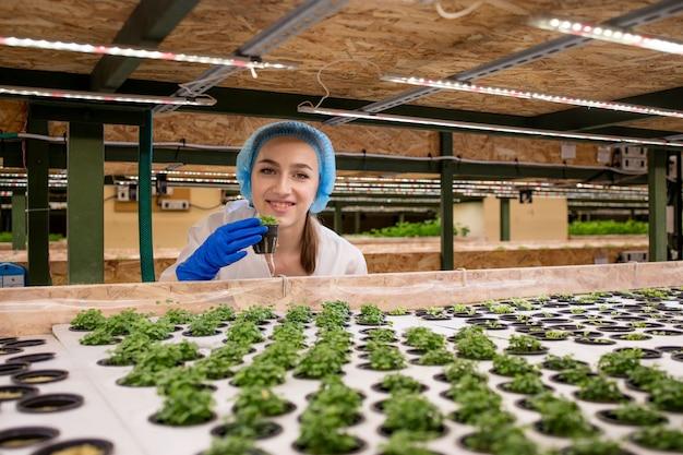 朝、水耕栽培農場から野菜を収穫する若い農夫のポートレート。水耕栽培、有機栽培の新鮮な野菜。温室で水耕野菜園で働く農家。