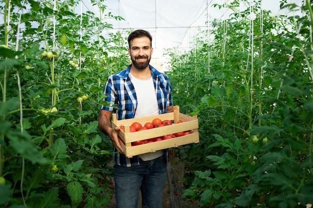 Портрет молодого улыбающегося фермера со свежесобранными помидорами и овощами, стоящими в тепличном саду