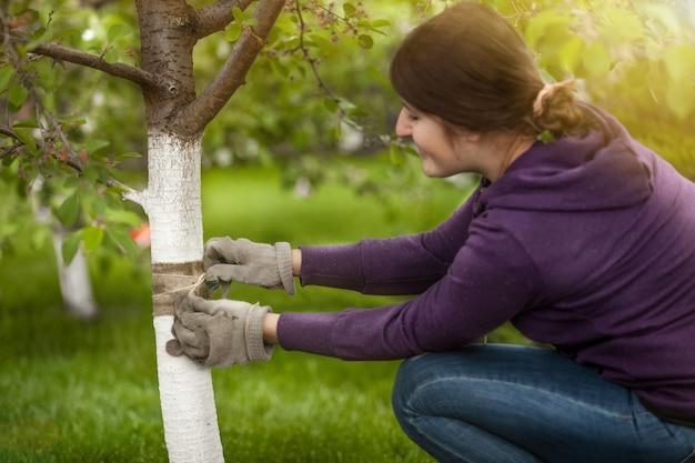 곤충을 방지하기 위해 나무 껍질에 밴드를 묶는 젊은 여자의 초상화