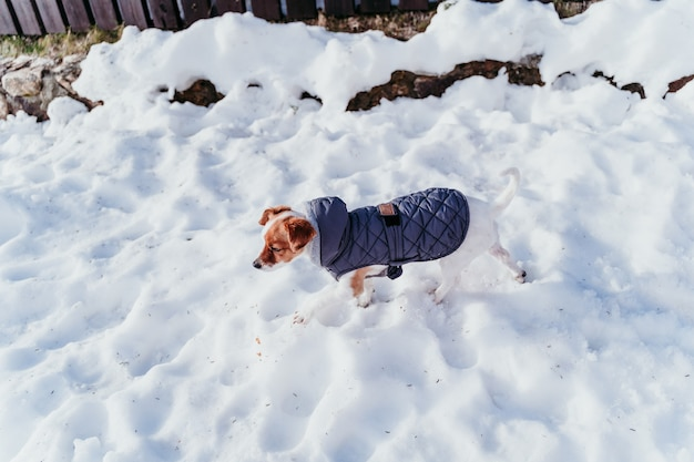 灰色のコートを着て雪の中で美しいジャックラッセル犬の屋外の肖像画。