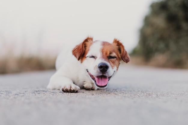 床に座ってカメラを見てかわいい小型犬の屋外の肖像画。