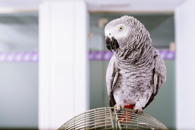Portrait of a parrot bird. veterinary concept.