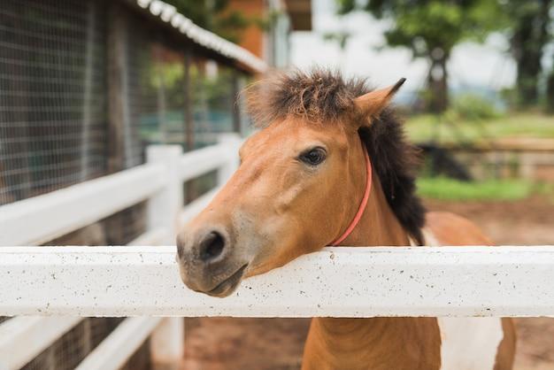 Portrait of pony foal in farm