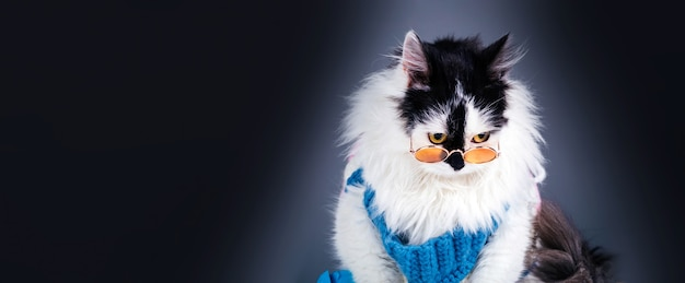 Portrait of sad, black white cat in knitted winter sweater and glasses on gray background, panoramic mock-up with space for text