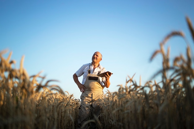 Portrait of senior farmer agronomist in wheat field checking crops before harvest and holding tablet computer