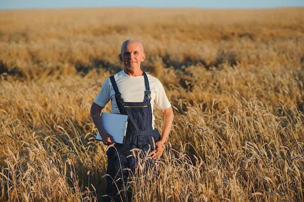 Portrait of senior farmer agronomist in wheat field
