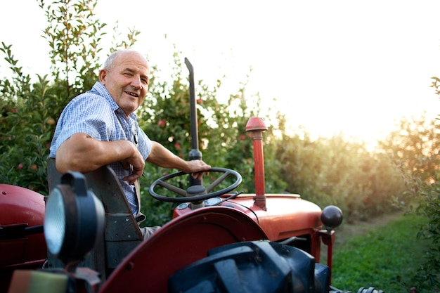 Ritratto del coltivatore dell'uomo anziano che guida la sua vecchia macchina del trattore in stile retrò attraverso il frutteto di mele nel tramonto