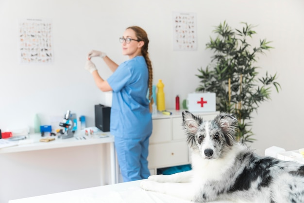 Portrait of a sick dog on table with female veterinarian standing in the background