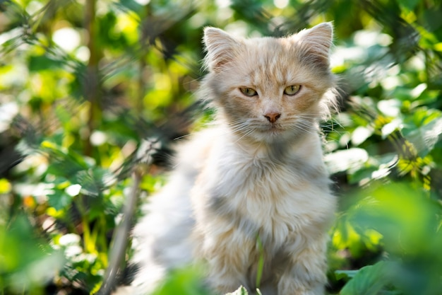 Portrait of a small yellow cat sitting in green grass on a sunny day.