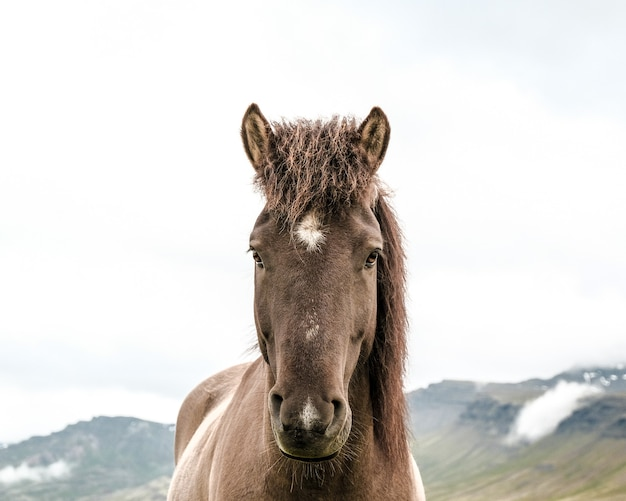 Portrait of a stallion horse