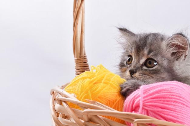 Portrait of a striped gray kitten in a wicker basket. a charming pet.