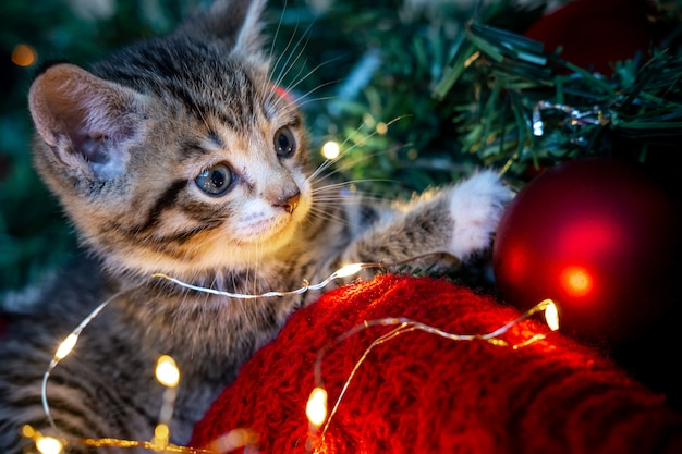 Portrait striped kitten playing with christmas lights garland