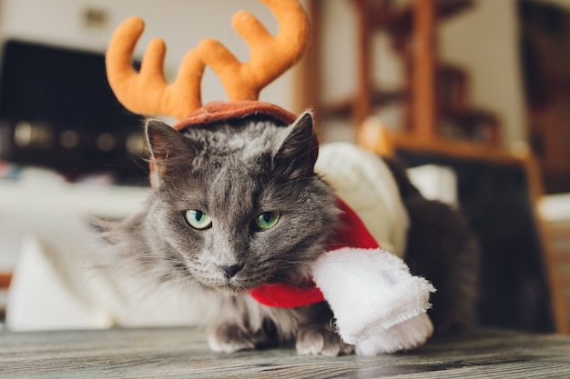 Portrait of a tabby cat in santa claus costume