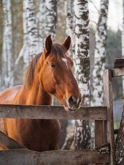 Portrait of a thoroughbred horse in an open-air aviary.