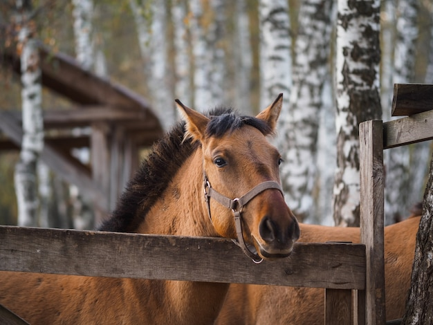 Portrait of a thoroughbred horse in an open-air aviary. Premium Photo
