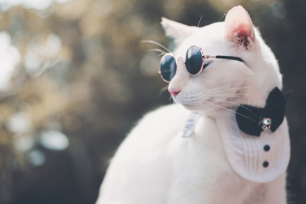 Portrait of tuxedo white cat wearing sunglasses and suit, animal  fashion concept.
