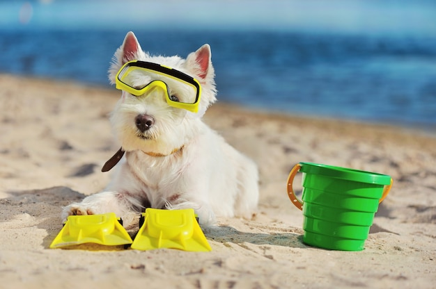 Portrait of a west highland dog wearing diving equipment