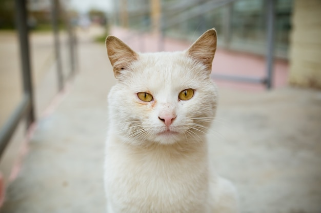 Portrait of white cat looking at camera