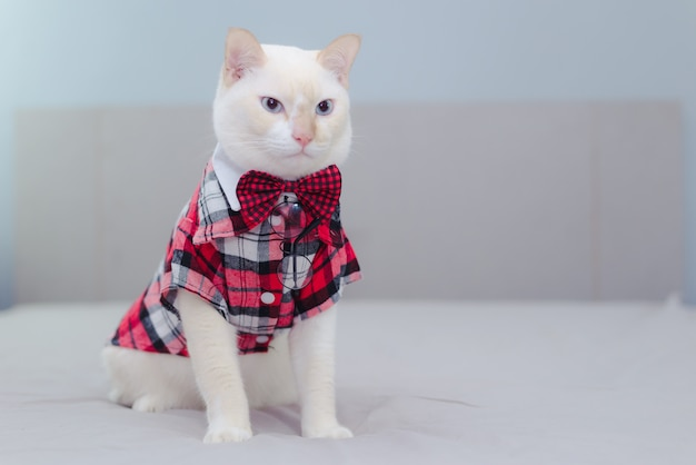 Portrait of white cat wearing a bow tie