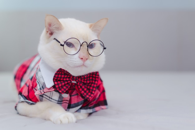 Portrait of white cat wearing glasses and a bow tie