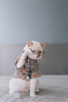 Portrait of white cat wearing glasses, pet fashion concept. white cat lying on bed.