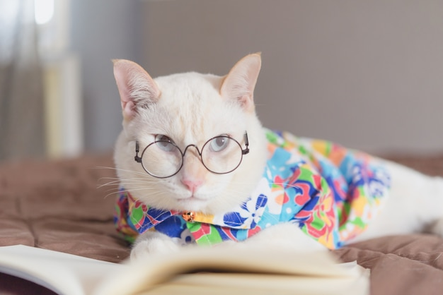 Portrait of white cat wearing glasses and reading book