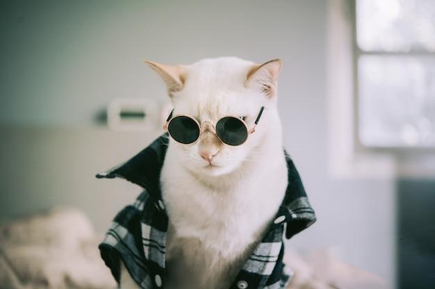 Portrait of white cat wearing glasses