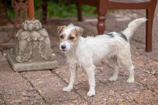 Portrait of white dog on the floor brown brick