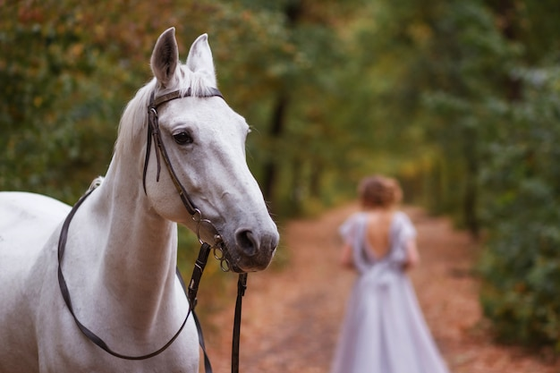 Portrait of a white horse. in the background is a girl in a dress. blurred background, artistic effect